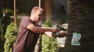 инъекция пальм в Сочи