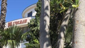 Красмашевский пальмы